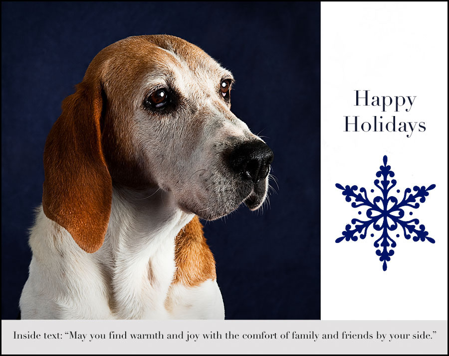 Holiday Cards to Benefit the Humane Society of Chittenden County ...