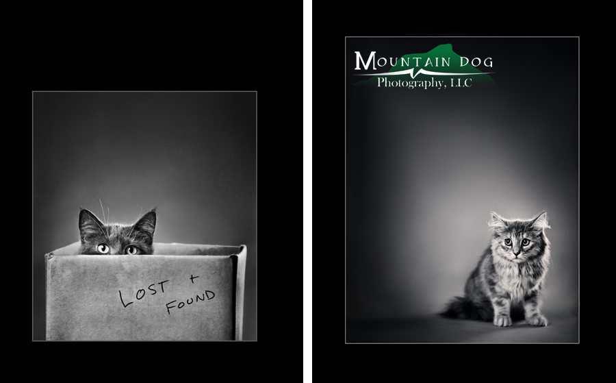 """""""Optimism"""" on the left is a merit earning print. """"Stage Fright"""" on the right was part of my submission portfolio and an award winning image in Vermont. Unfortunately it did not earn a merit this year. I will resubmit it next year."""